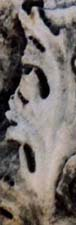 One of the heads spotted on the Ephesian Heads Stone in 1996, click to see Heads Stone, photos by Jim McPherson, 1996